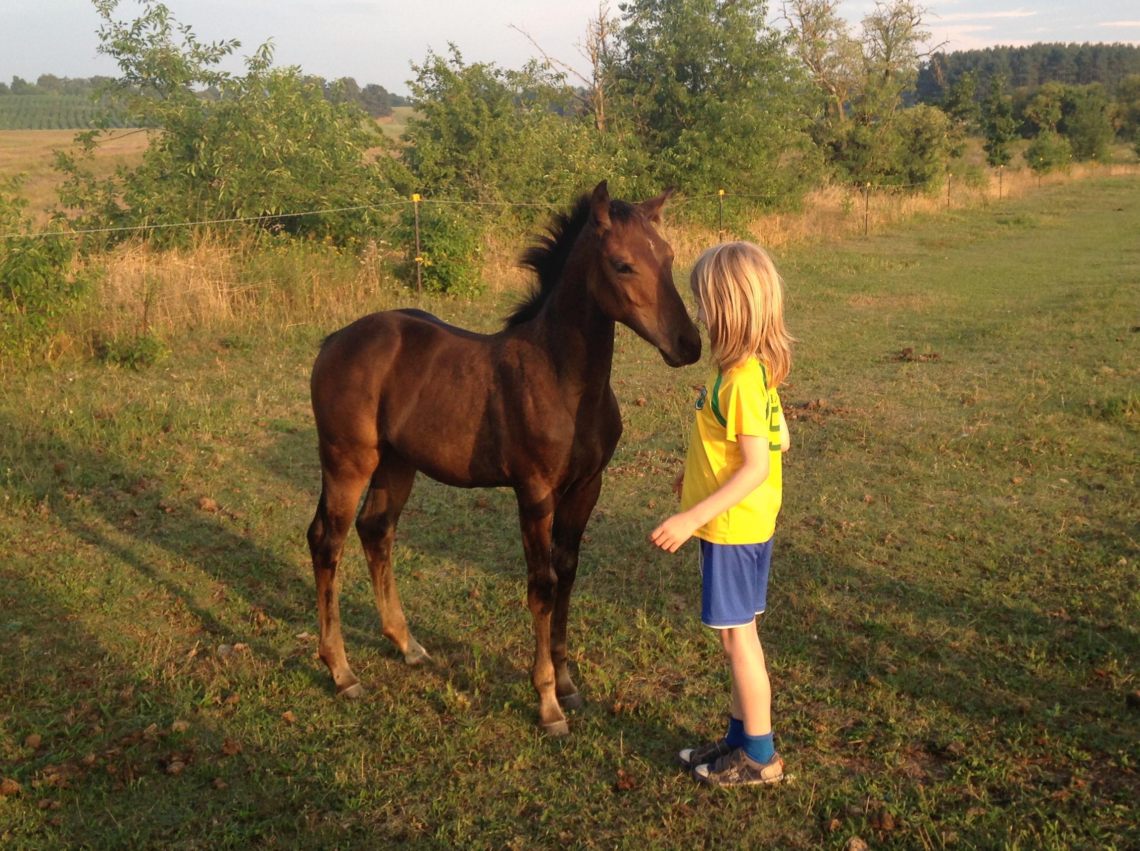 3 nico pferd